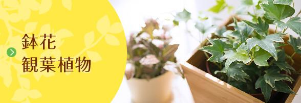鉢花・観葉植物
